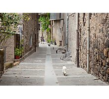 Cats in a row Photographic Print