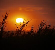 Sunset Across the Fens 1 by Rob73