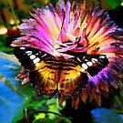 In Paradise garden by kindangel