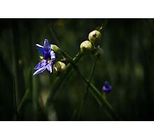 Wild Photographic Print
