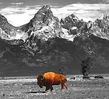 Where The Buffalo Roam by Lanis Rossi