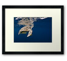 Golden Turtle Framed Print