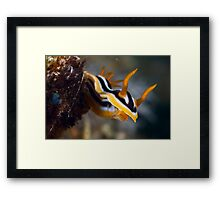 Friendly Framed Print