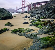 Algae San Francisco by jswolfphoto