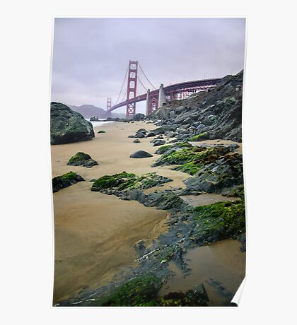 Algae San Francisco Poster