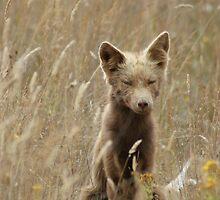 Brown Fox by gloriajean