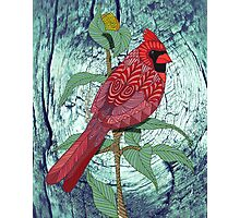 Virginia Cardinal Photographic Print