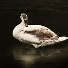 The young Swan by brijo