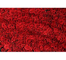 Gorgeous Bed of Red Roses Photographic Print