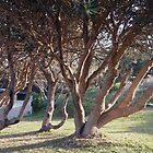 Coastal trees at Pippi's Beach, Yamba NSW by Margaret Morgan (Watkins)