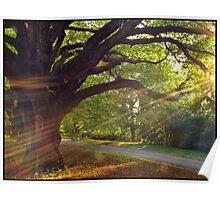 Mt Wilson sun rays Poster