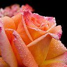 A glowing rose on a rainy morning by Celeste Mookherjee