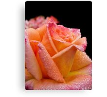 A glowing rose on a rainy morning Canvas Print