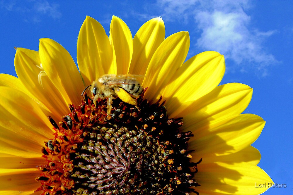 Sunflower 2 by Lori Peters