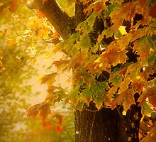 Fall Light by Lucinda Walter