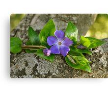 Una flor azul..... Canvas Print