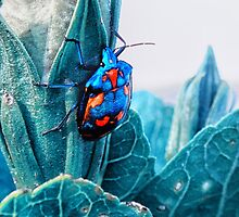 Cotton Harlequin Bug by Karin  Taylor