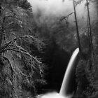 An Eagle Creek White Christmas · Monochrome by Tula Top