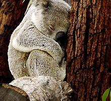 Sleepy Time by Julia Harwood