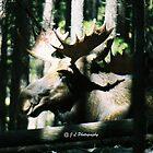 Moose - RMNP by jolynncreations