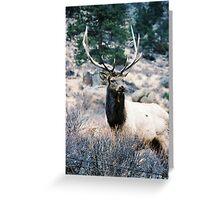 RMNP - Elk Greeting Card