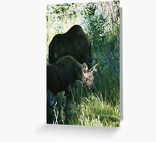 RMNP - Moose Greeting Card