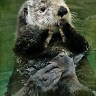 Sea Otter by Kymie