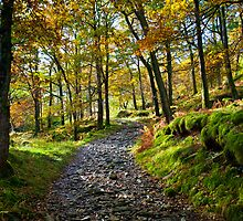 autumnal borrowdale by paul mcgreevy