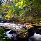 autumn afternoon on the river by paul mcgreevy