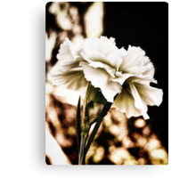 white carnation Canvas Print