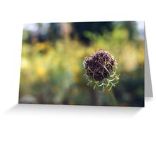 Wild Carrot (going to seed) Greeting Card