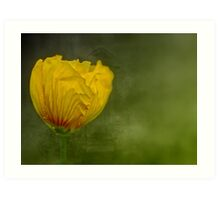 """Birth of a Golden Poppy............."" Art Print"