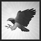 Black chested Eagle buzzard  by Gregorio