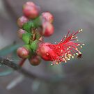 From Bud to Blossom by Jill Fisher