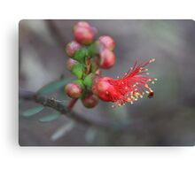 From Bud to Blossom Canvas Print