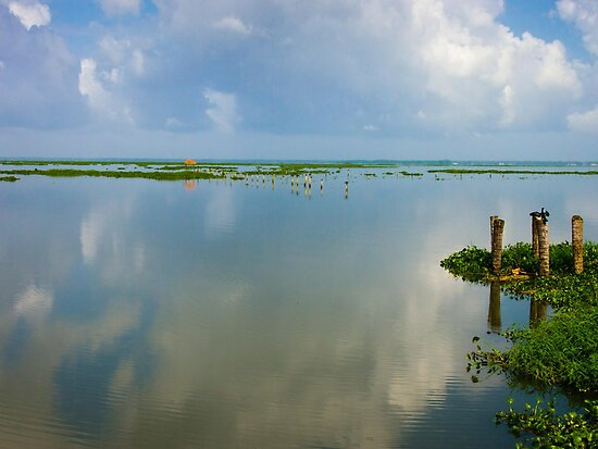 Lake Vemabanad, Kerla, India August 2012 by jackmbernstein