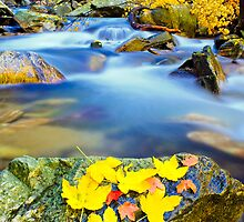 autumn along the river by plamenx