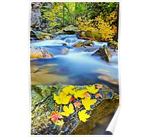autumn along the river Poster