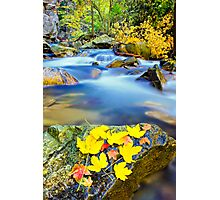 autumn along the river Photographic Print