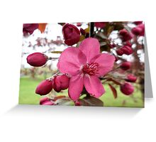 Buds and Red Blooming Flower on Crabapple Tree Greeting Card