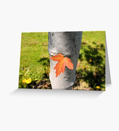 Orange Leaf Sticking out of a Tree Greeting Card