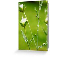 Rain, rain and more rain..flowers love it !! Greeting Card