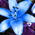 Blue Asiatic Lily by MSRowe Art and Design