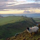 Mucklebank Crag and the Walltown Farm sheep by Joan Thirlaway