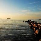 Flying across the evening sea by jchanders