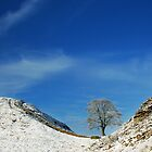 Hadrian's Wall at Sycamore Gap by Joan Thirlaway