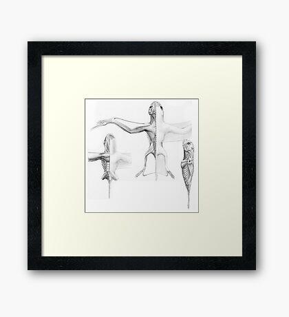 Anurognath Muscle Study Framed Print