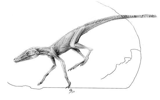 Terrestrisuchus Muscle Study by Jaime Headden