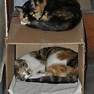 Double Decker Cats by KarenM