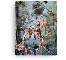 Withered Beauties Canvas Print